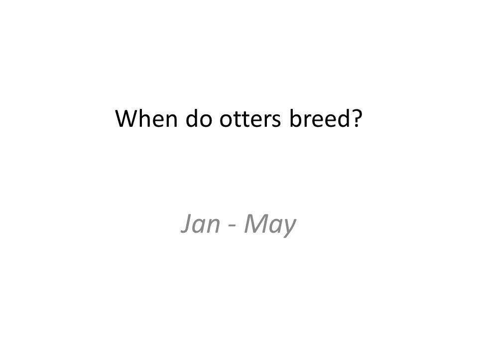 When do otters breed Jan - May