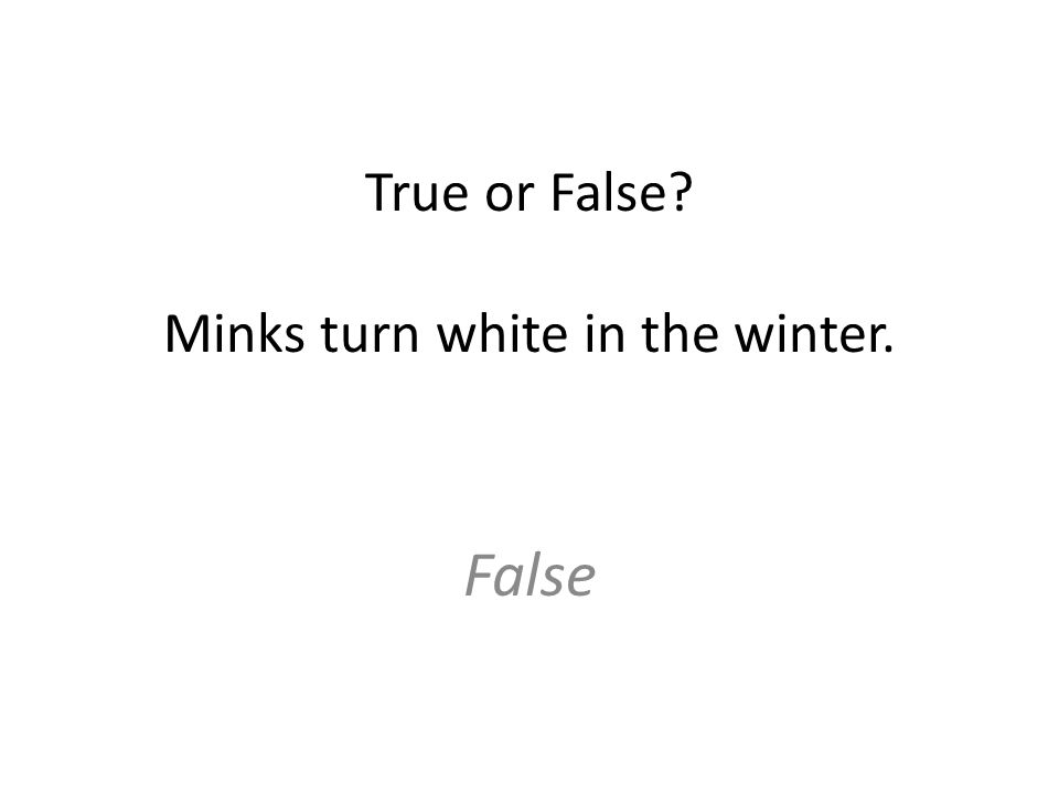 True or False? Minks turn white in the winter. False