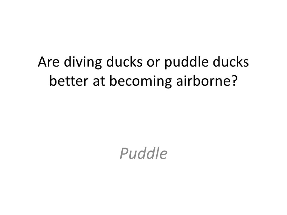 Are diving ducks or puddle ducks better at becoming airborne Puddle