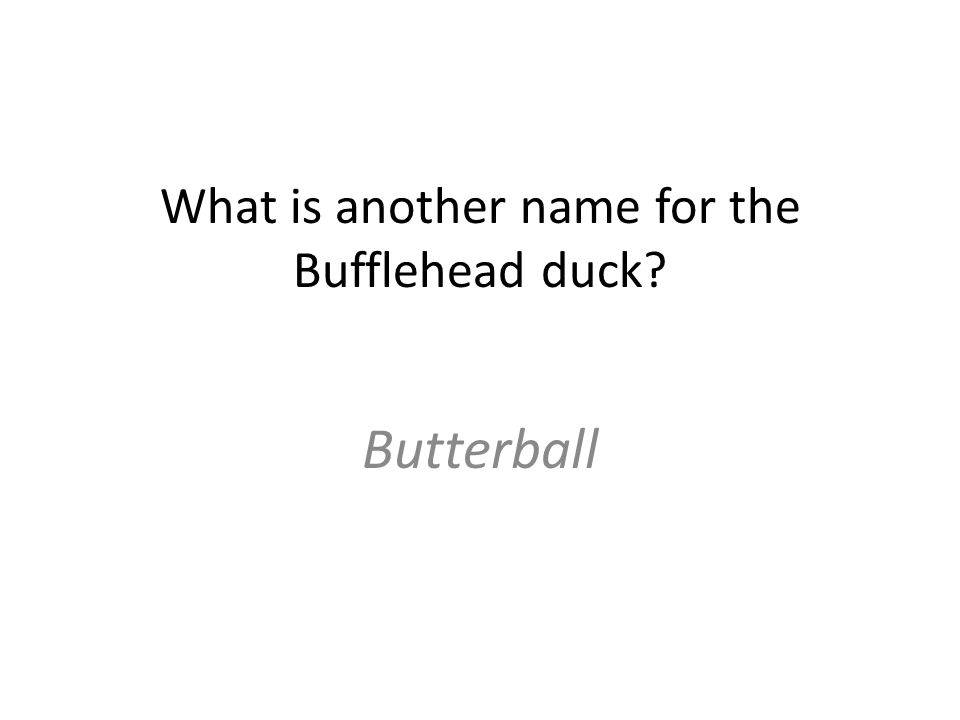What is another name for the Bufflehead duck Butterball