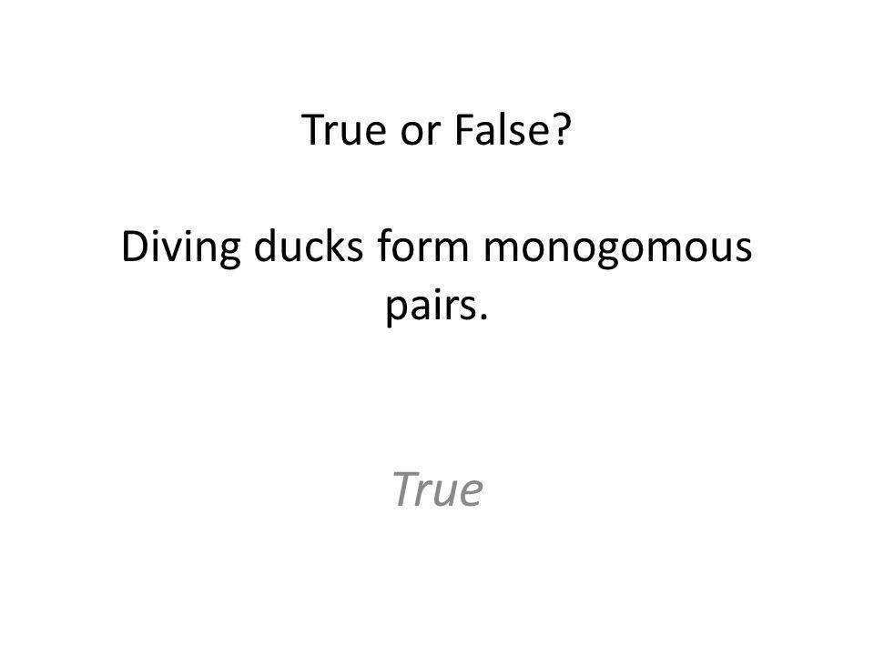 True or False Diving ducks form monogomous pairs. True