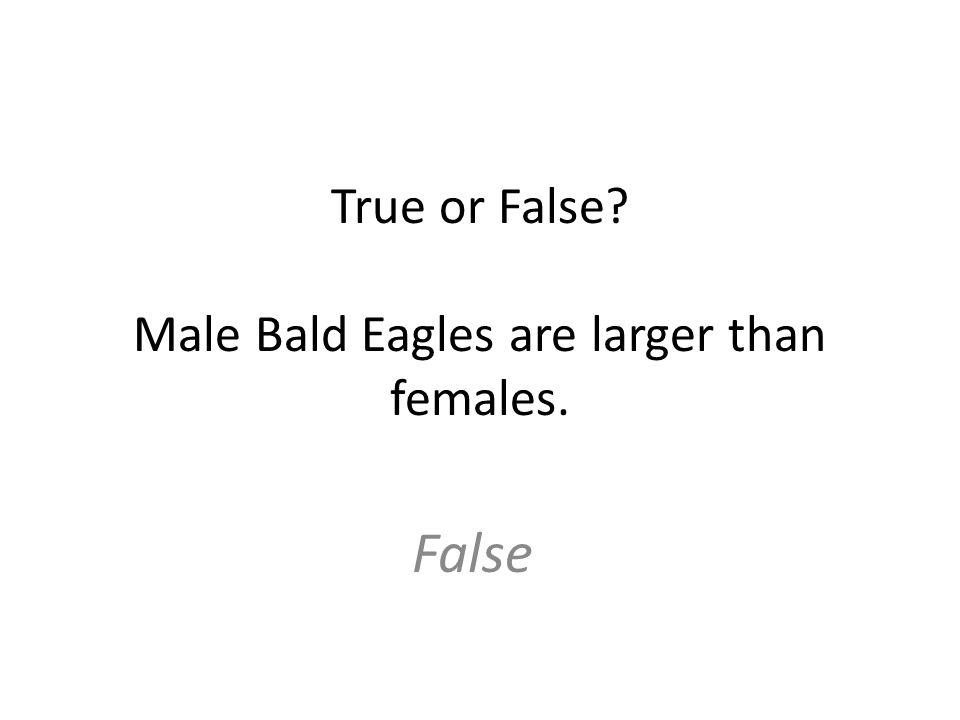 True or False Male Bald Eagles are larger than females. False