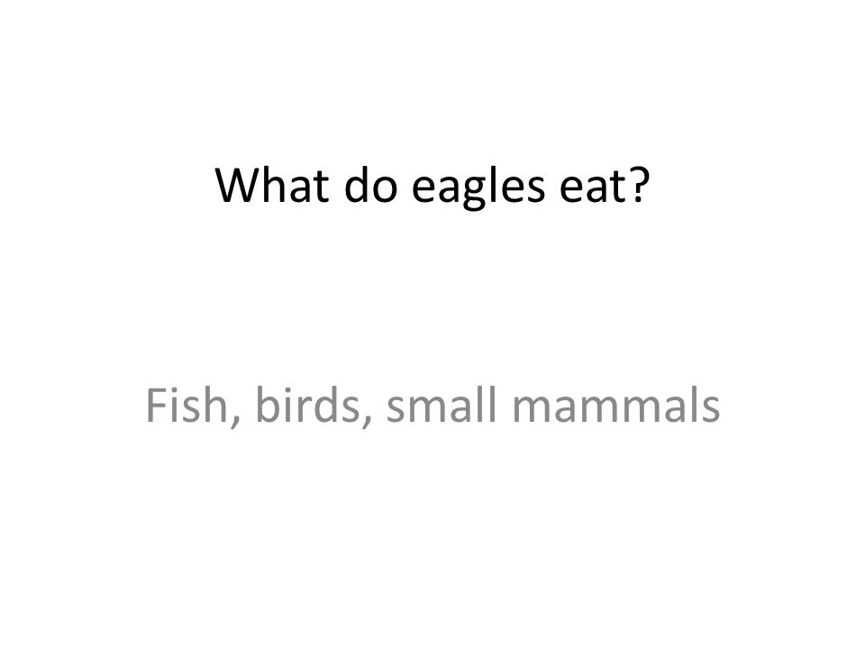 What do eagles eat Fish, birds, small mammals