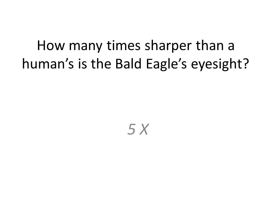 How many times sharper than a human's is the Bald Eagle's eyesight 5 X