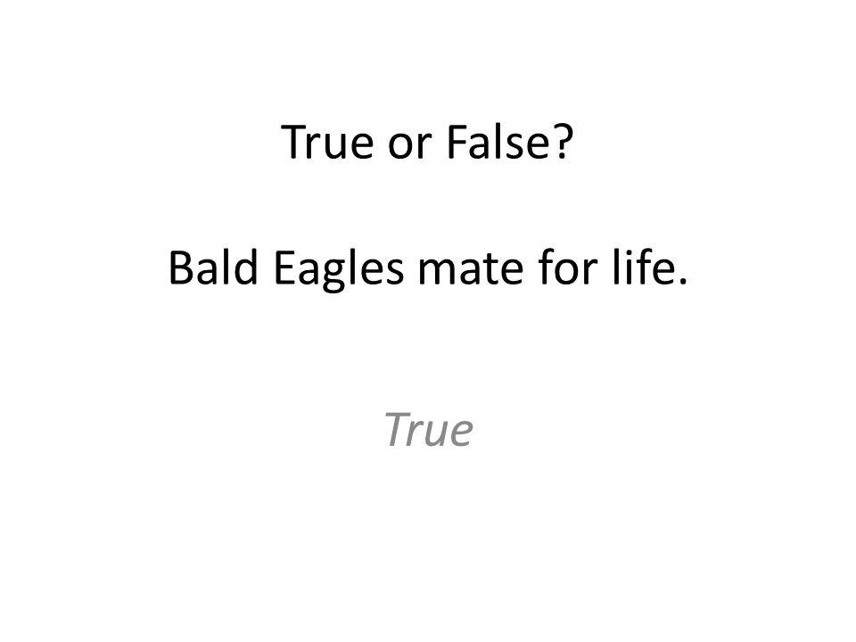 True or False? Bald Eagles mate for life. True