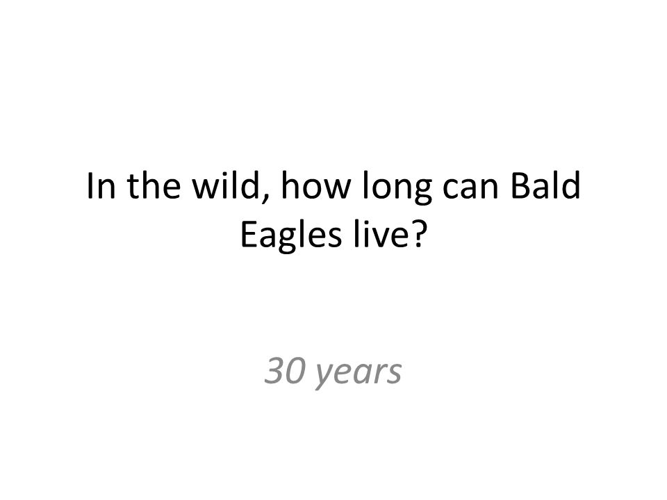 In the wild, how long can Bald Eagles live 30 years