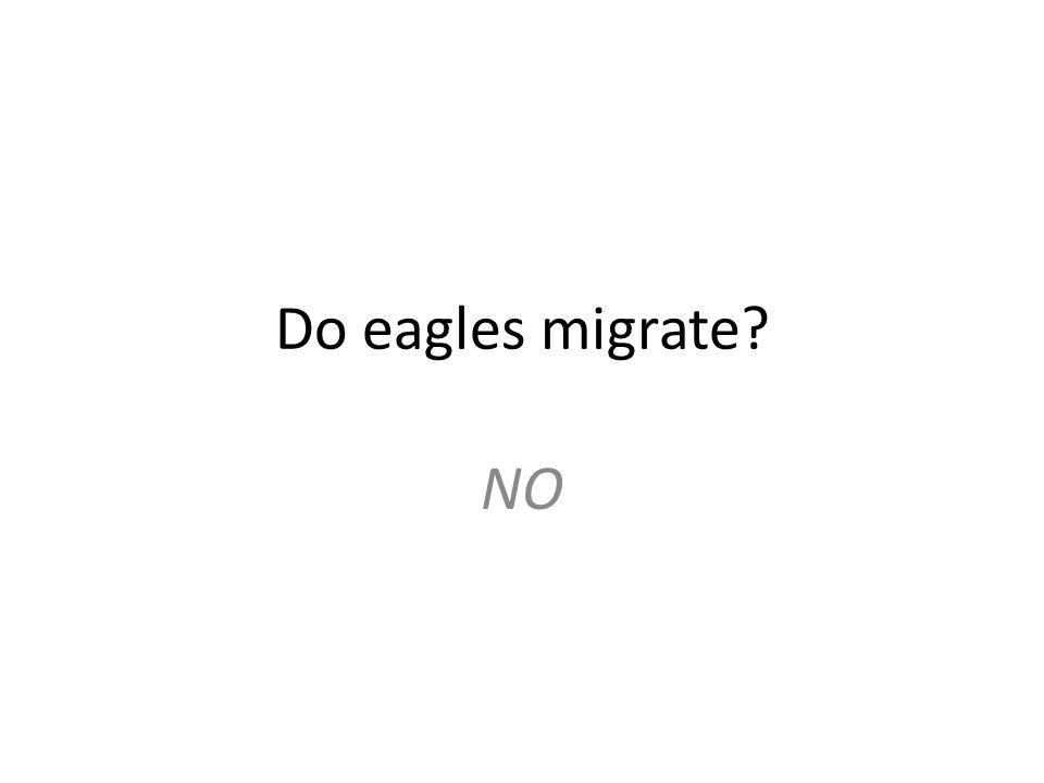 Do eagles migrate? NO
