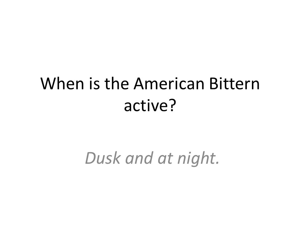 When is the American Bittern active Dusk and at night.