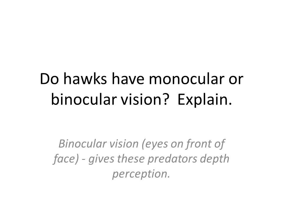 Do hawks have monocular or binocular vision? Explain. Binocular vision (eyes on front of face) - gives these predators depth perception.