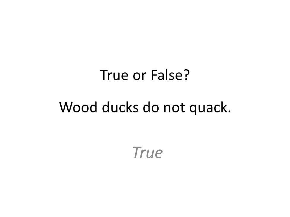 True or False Wood ducks do not quack. True