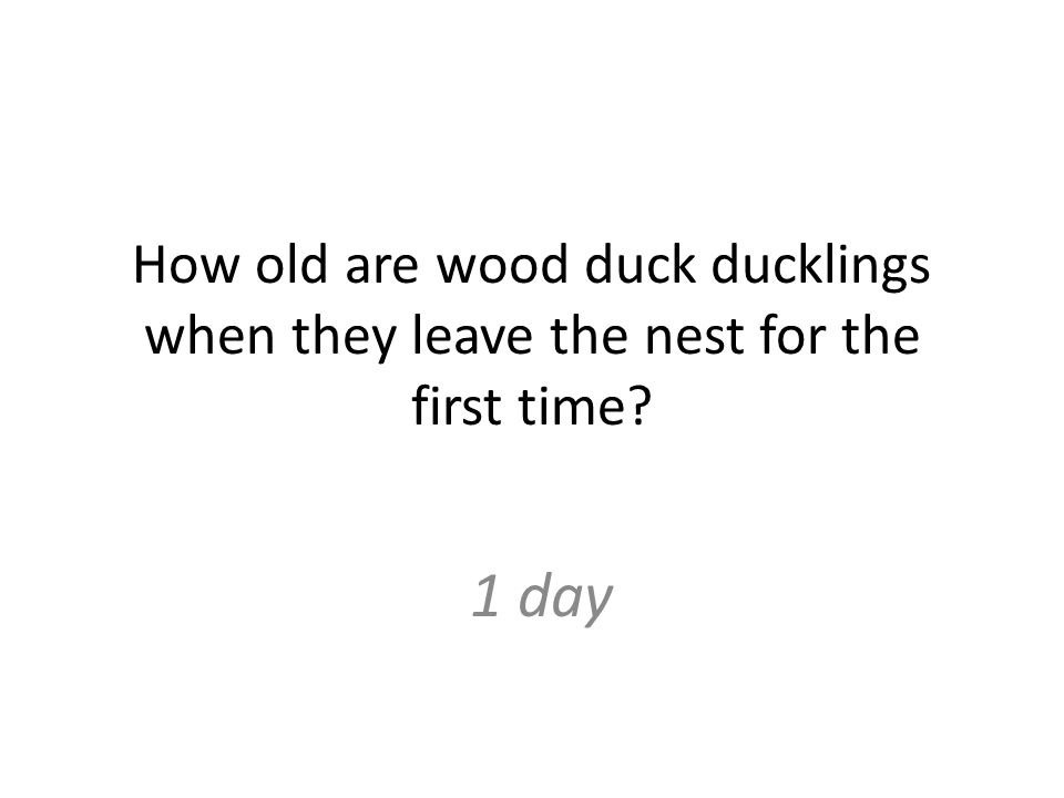How old are wood duck ducklings when they leave the nest for the first time 1 day