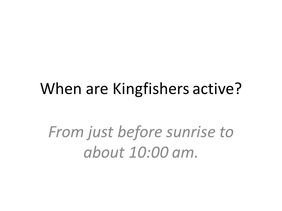 When are Kingfishers active From just before sunrise to about 10:00 am.