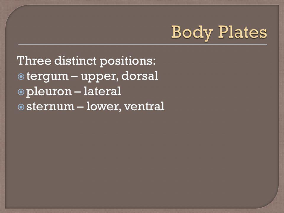 Three distinct positions:  tergum – upper, dorsal  pleuron – lateral  sternum – lower, ventral