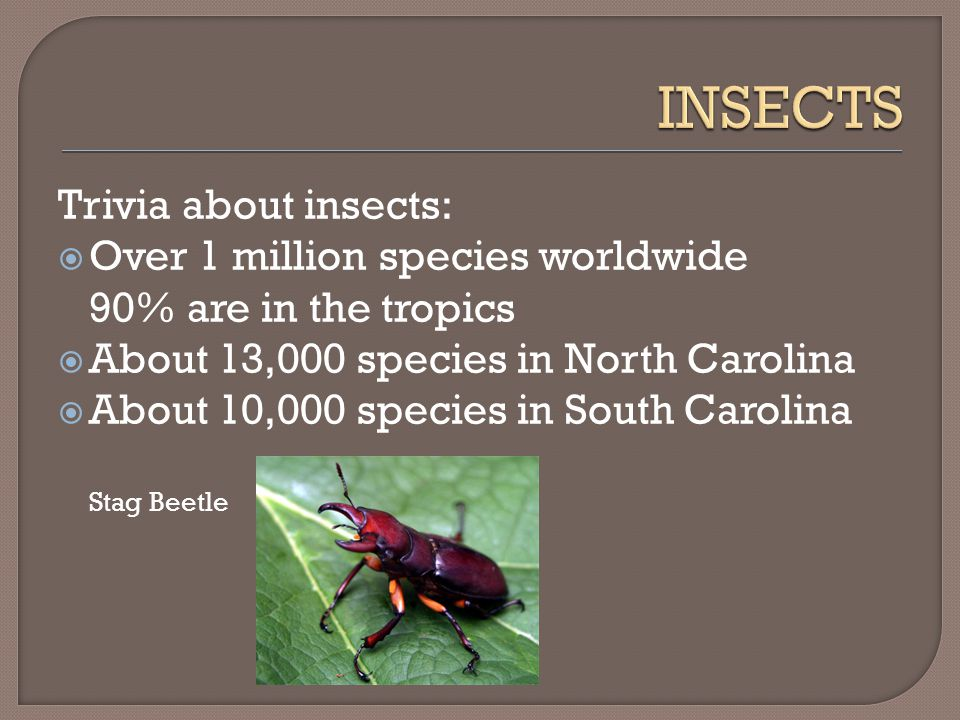 Trivia about insects:  Over 1 million species worldwide 90% are in the tropics  About 13,000 species in North Carolina  About 10,000 species in South Carolina Stag Beetle