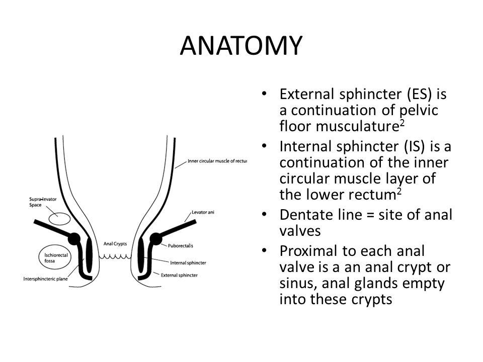 ANATOMY External sphincter (ES) is a continuation of pelvic floor musculature 2 Internal sphincter (IS) is a continuation of the inner circular muscle