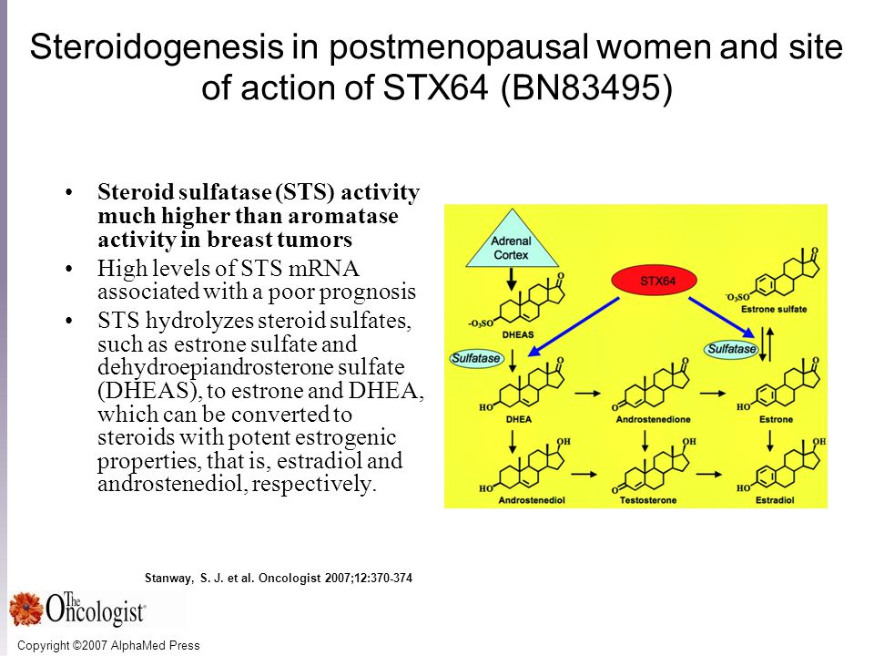 Copyright ©2007 AlphaMed Press Stanway, S. J. et al. Oncologist 2007;12:370-374 Steroidogenesis in postmenopausal women and site of action of STX64 (B