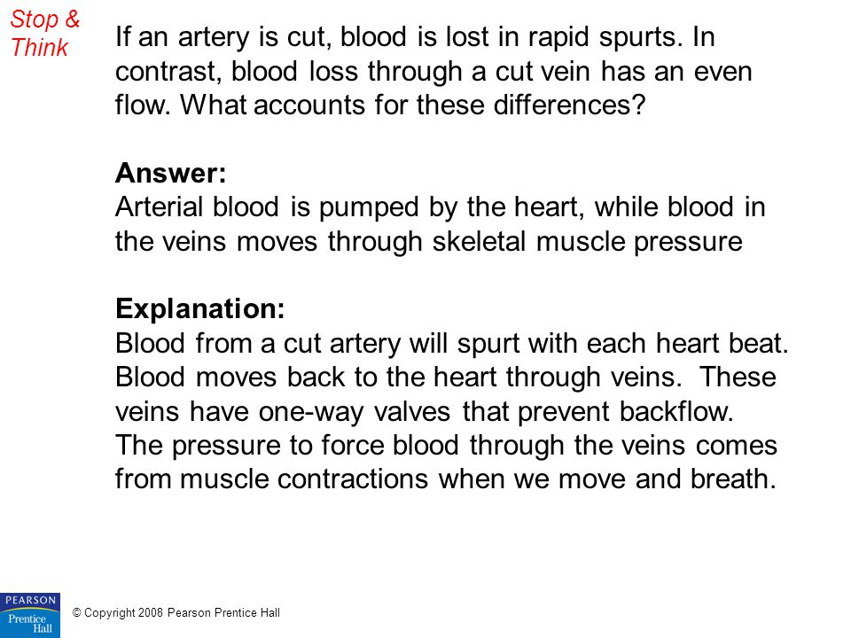 Stop & Think If an artery is cut, blood is lost in rapid spurts. In contrast, blood loss through a cut vein has an even flow. What accounts for these