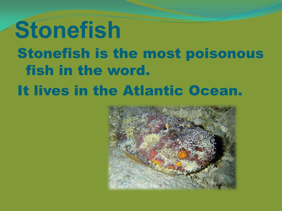 Stonefish Stonefish is the most poisonous fish in the word. It lives in the Atlantic Ocean.