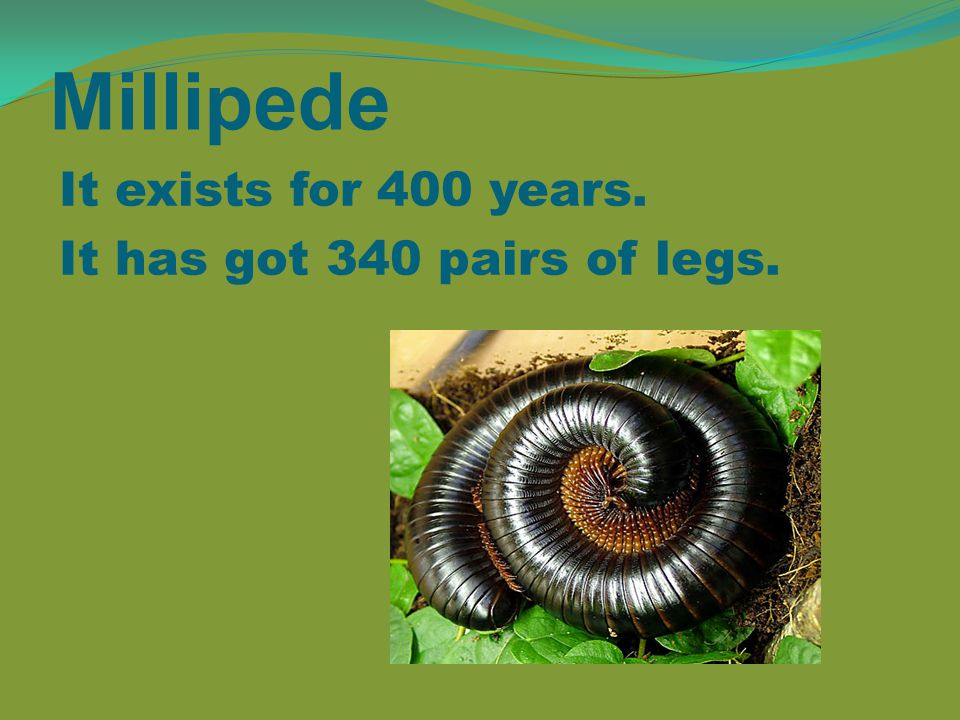 Millipede It exists for 400 years. It has got 340 pairs of legs.