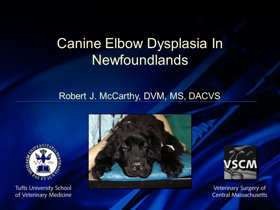 Advances in External Skeletal Fixation Canine Elbow Dysplasia In Newfoundlands Robert J.