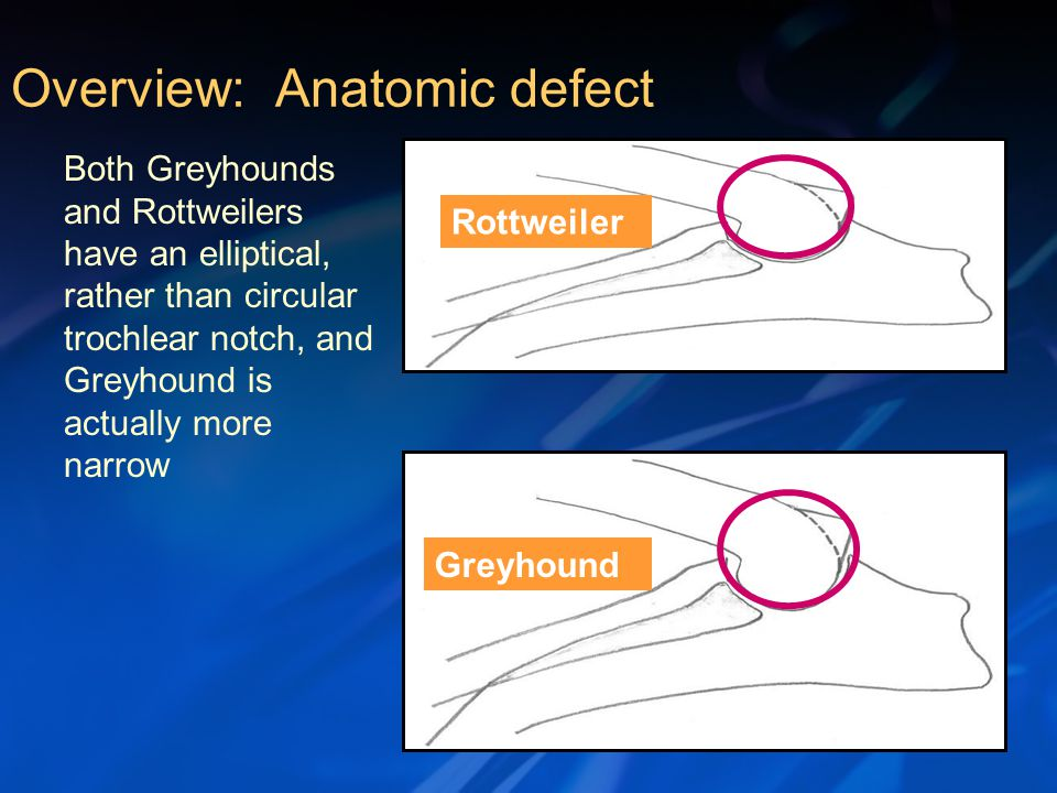 Rottweiler Greyhound Both Greyhounds and Rottweilers have an elliptical, rather than circular trochlear notch, and Greyhound is actually more narrow Overview: Anatomic defect