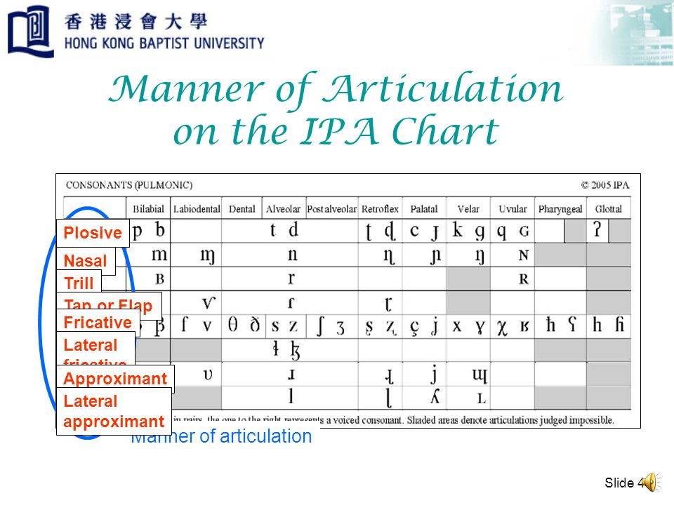 Slide 3 Manner of Articulation The manner of articulation refers to the way airflow is controlled in the production of a phone (i.e.