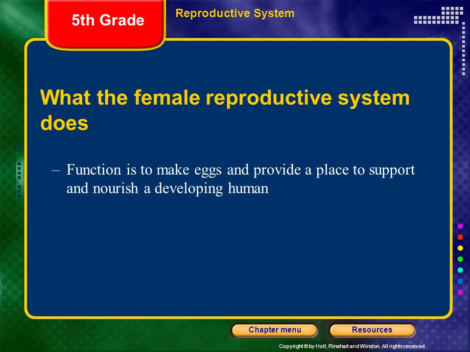 Copyright © by Holt, Rinehart and Winston. All rights reserved. ResourcesChapter menu What the female reproductive system does –Function is to make eg
