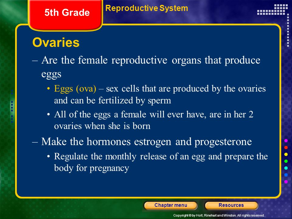 Copyright © by Holt, Rinehart and Winston. All rights reserved. ResourcesChapter menu Ovaries –Are the female reproductive organs that produce eggs Eg