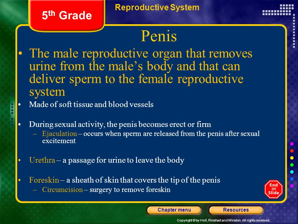 Copyright © by Holt, Rinehart and Winston. All rights reserved. ResourcesChapter menu Reproductive System 5 th Grade Penis The male reproductive organ