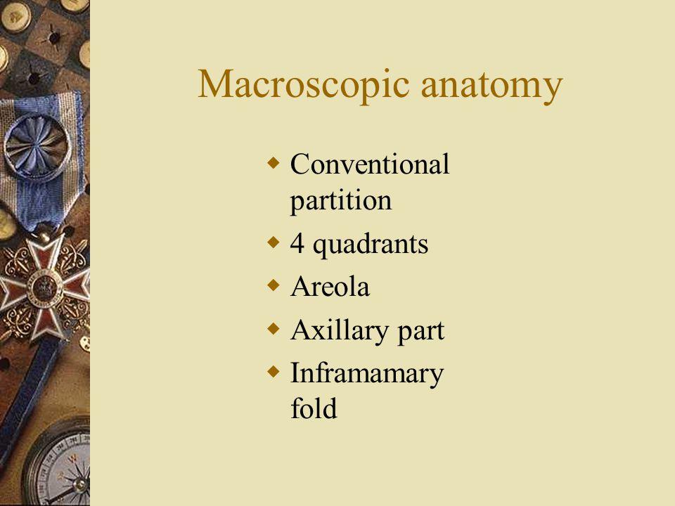 Macroscopic anatomy  Conventional partition  4 quadrants  Areola  Axillary part  Inframamary fold