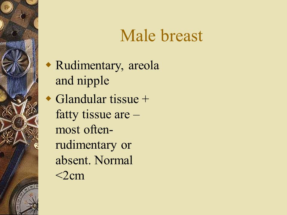 Male breast  Rudimentary, areola and nipple  Glandular tissue + fatty tissue are – most often- rudimentary or absent. Normal <2cm