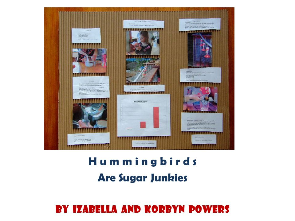 H u m m i n g b i r d s Are Sugar Junkies By Izabella and Korbyn Powers
