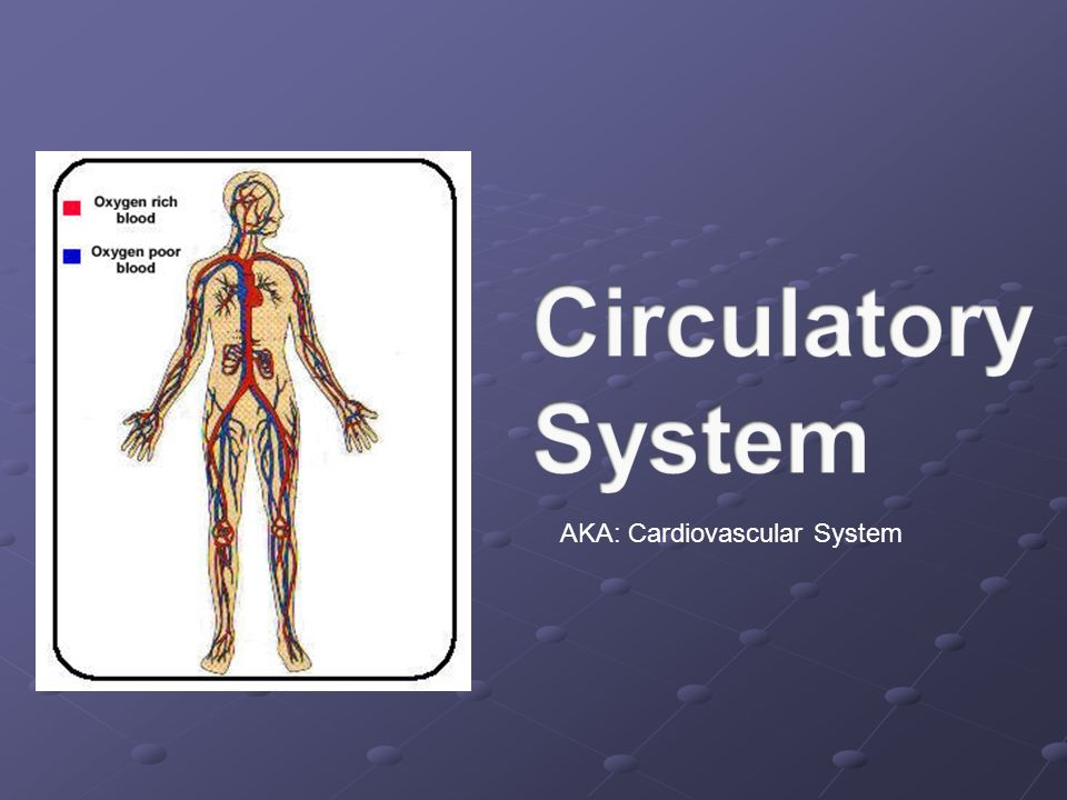 AKA: Cardiovascular System