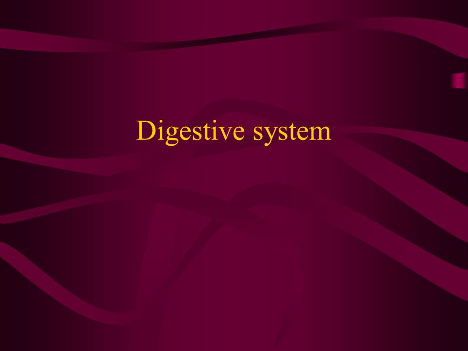 Learning Objectives Describe how the digestive system breaks down food either chemically or physically List and describe the function of the parts of the digestive system List and describe the function of the accessory organs of the digestive system Describe how bulimia, anorexia, and alcohol consumption affect the body