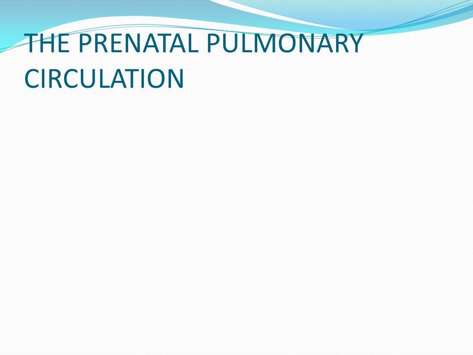 THE PRENATAL PULMONARY CIRCULATION
