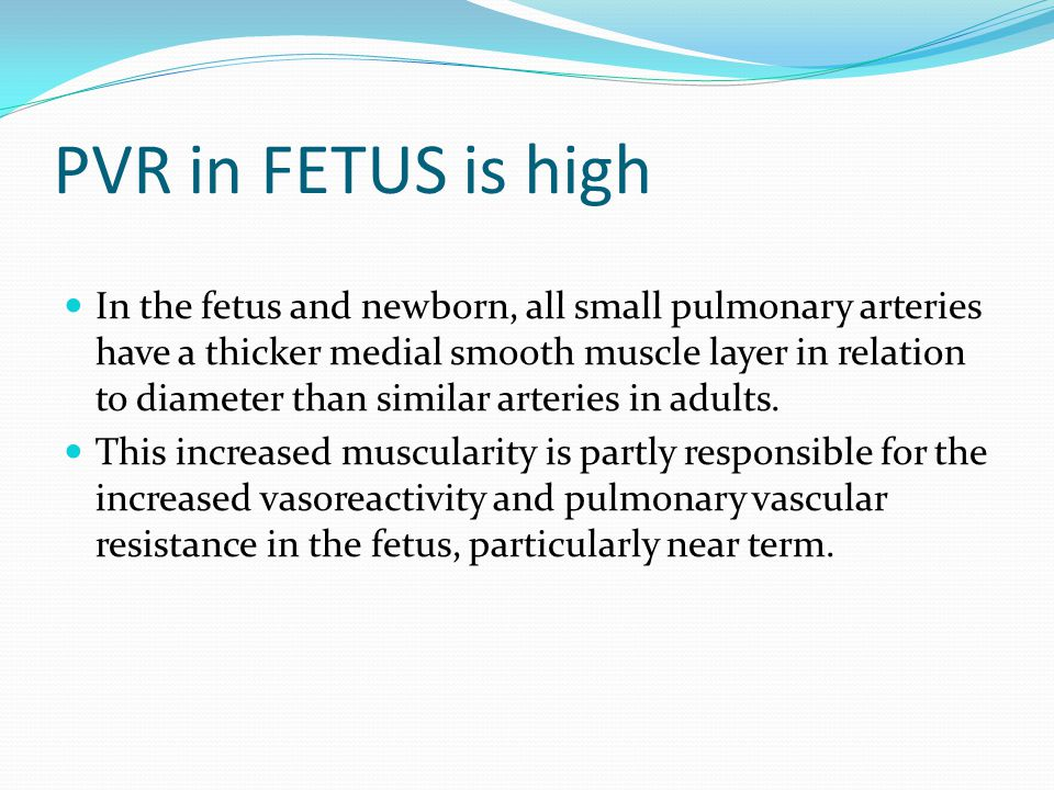 PVR in FETUS is high In the fetus and newborn, all small pulmonary arteries have a thicker medial smooth muscle layer in relation to diameter than sim