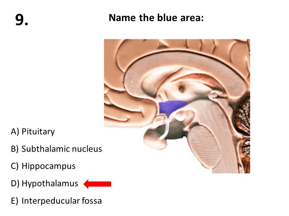 Name the blue area: A)Pituitary B)Subthalamic nucleus C)Hippocampus D)Hypothalamus E)Interpeducular fossa 9.