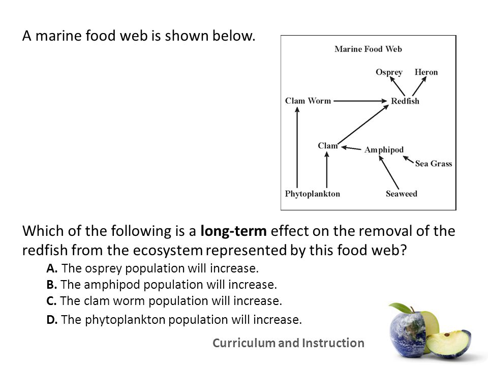 Curriculum and Instruction A marine food web is shown below. Which of the following is a long-term effect on the removal of the redfish from the ecosy