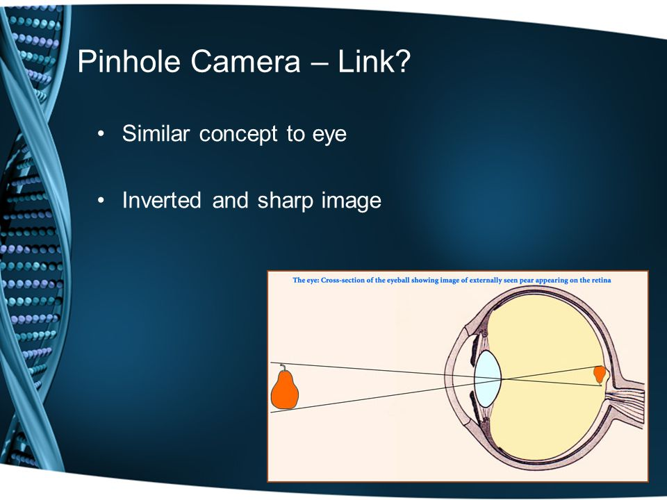 Pinhole Camera – Link Similar concept to eye Inverted and sharp image