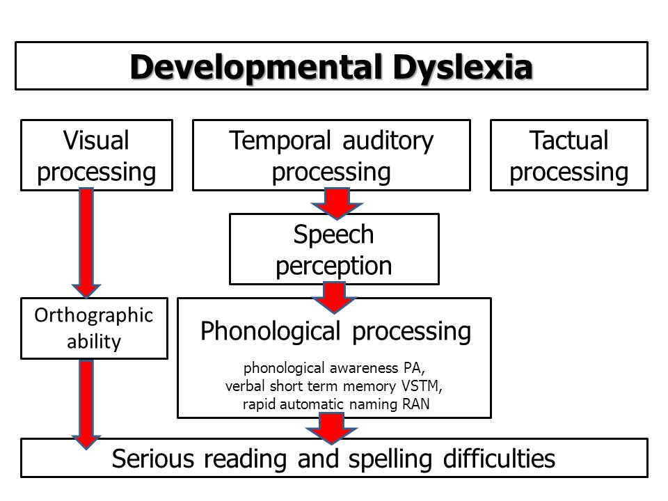 Phonological processing phonological awareness PA, verbal short term memory VSTM, rapid automatic naming RAN Speech perception Temporal auditory processing Visual processing Orthographic ability Tactual processing Developmental Dyslexia Serious reading and spelling difficulties