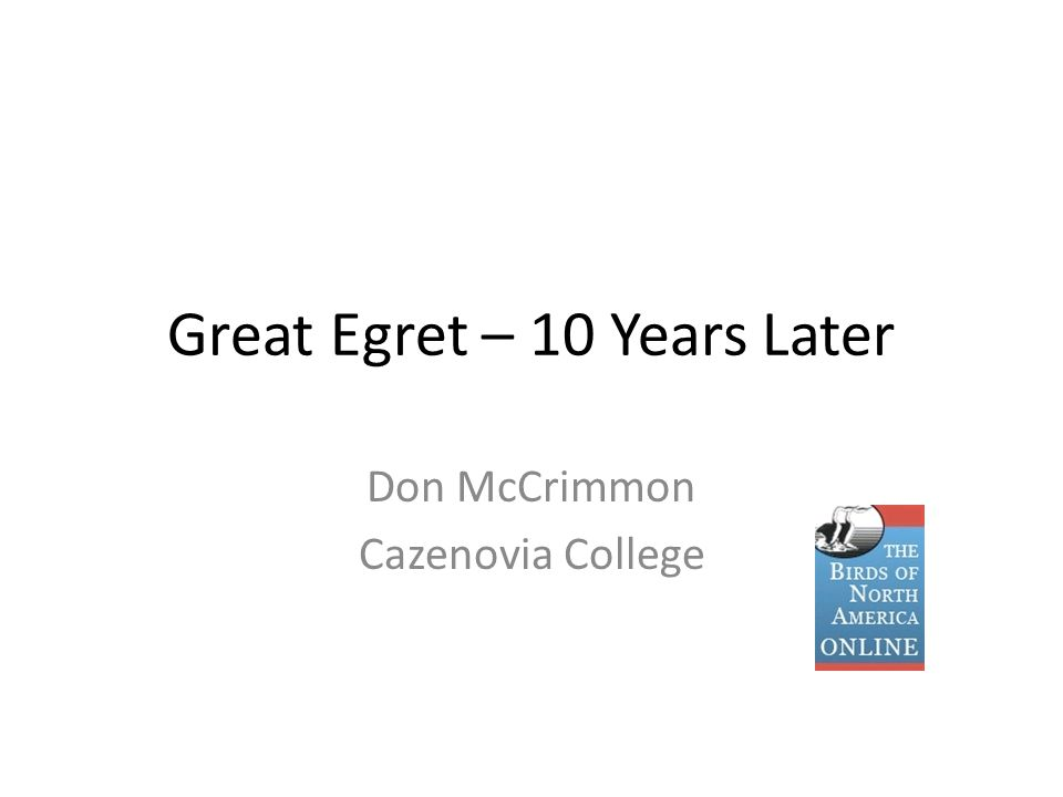 Great Egret – 10 Years Later Don McCrimmon Cazenovia College
