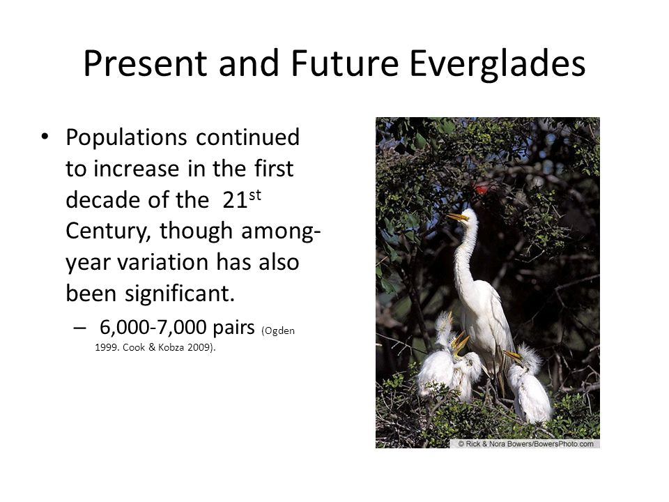 Present and Future Everglades Populations continued to increase in the first decade of the 21 st Century, though among- year variation has also been significant.