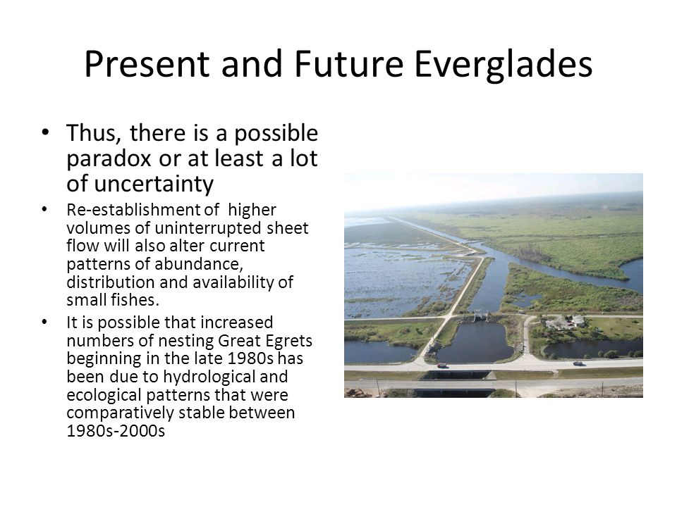 Present and Future Everglades Thus, there is a possible paradox or at least a lot of uncertainty Re-establishment of higher volumes of uninterrupted sheet flow will also alter current patterns of abundance, distribution and availability of small fishes.