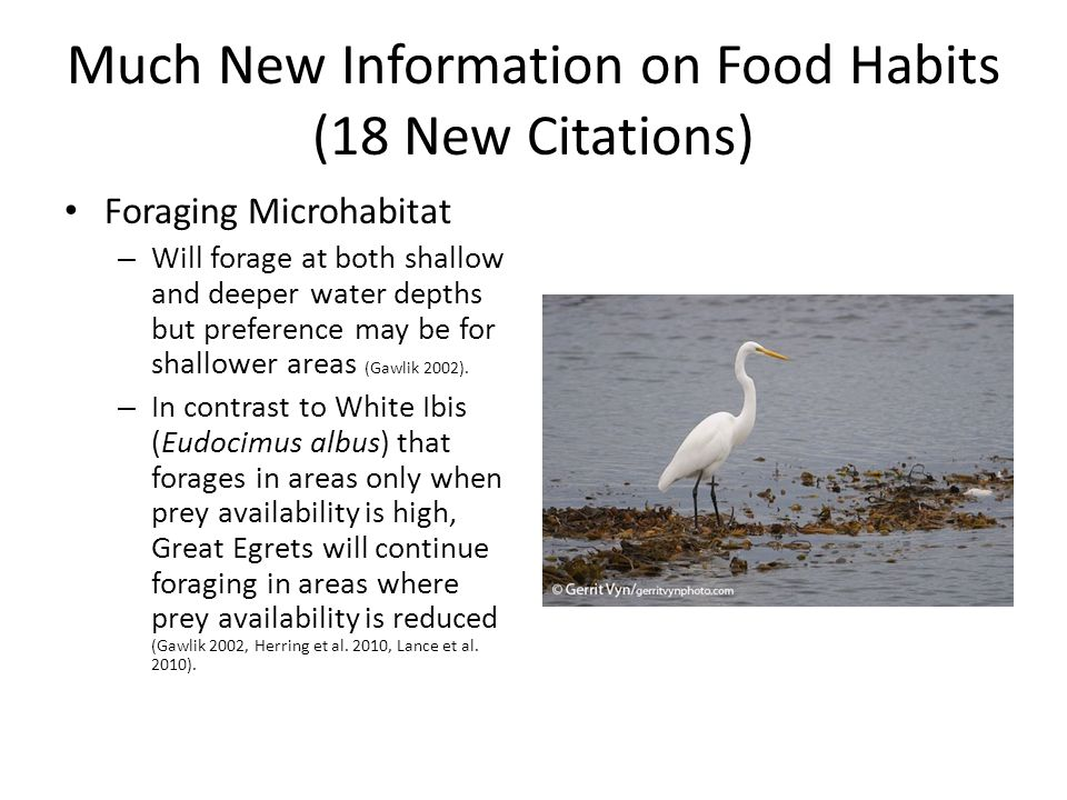 Much New Information on Food Habits (18 New Citations) Foraging Microhabitat – Will forage at both shallow and deeper water depths but preference may be for shallower areas (Gawlik 2002).