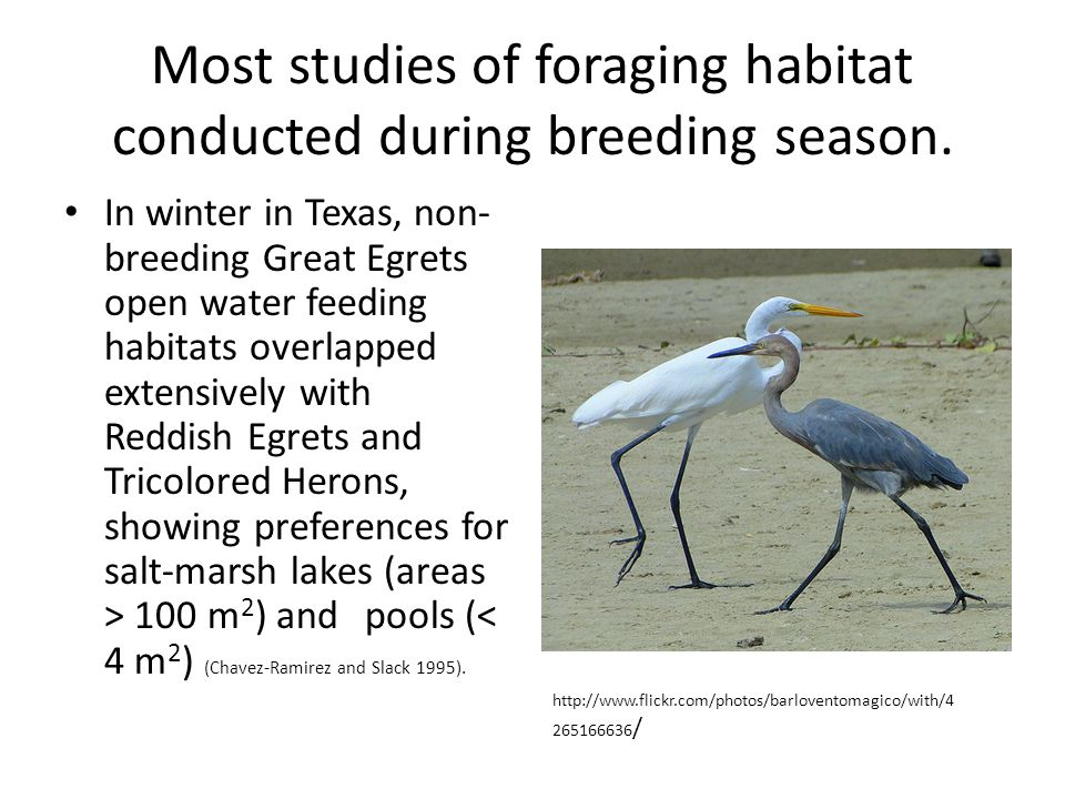 Most studies of foraging habitat conducted during breeding season.
