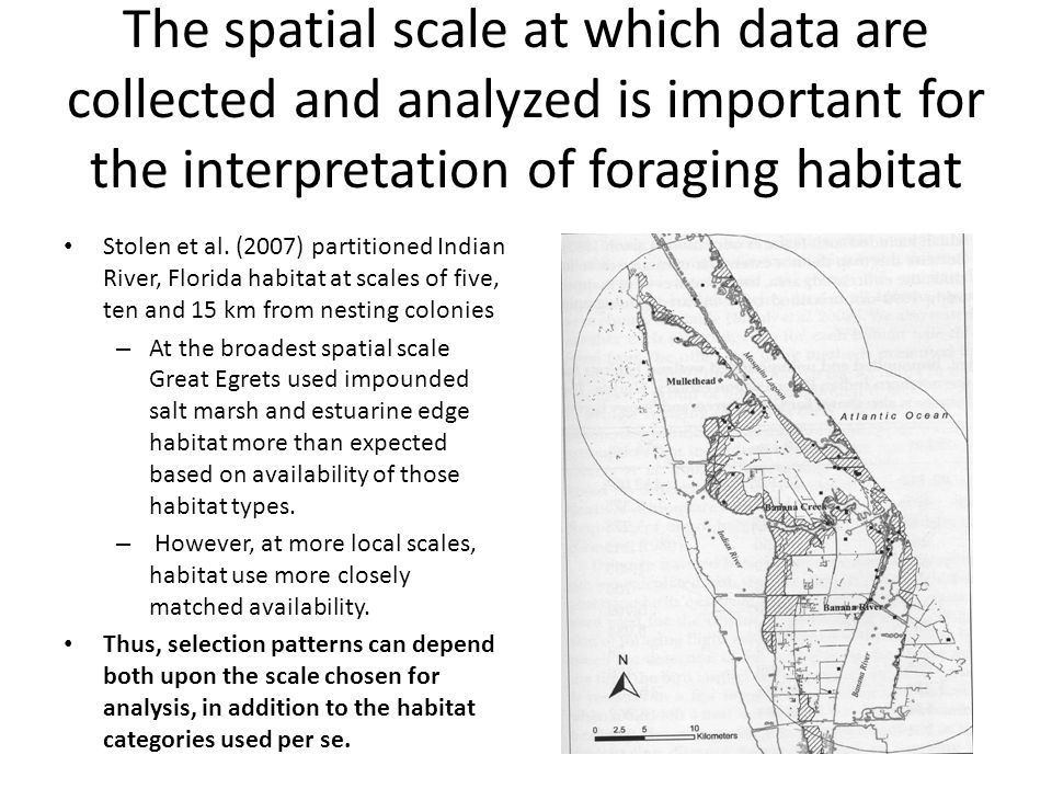 The spatial scale at which data are collected and analyzed is important for the interpretation of foraging habitat Stolen et al.