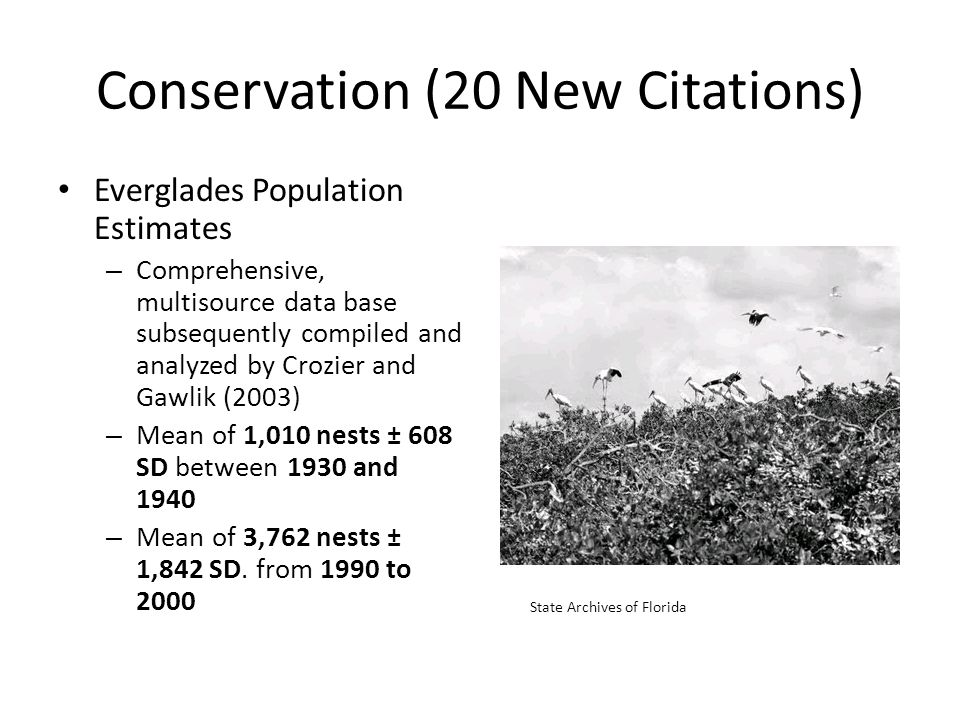 Conservation (20 New Citations) Everglades Population Estimates – Comprehensive, multisource data base subsequently compiled and analyzed by Crozier and Gawlik (2003) – Mean of 1,010 nests ± 608 SD between 1930 and 1940 – Mean of 3,762 nests ± 1,842 SD.