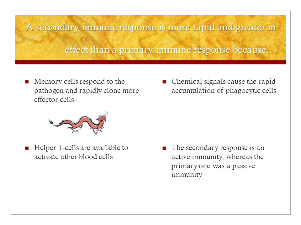 A secondary immune response is more rapid and greater in effect than a primary immune response because… Chemical signals cause the rapid accumulation of phagocytic cells The secondary response is an active immunity, whereas the primary one was a passive immunity Memory cells respond to the pathogen and rapidly clone more effector cells Helper T-cells are available to activate other blood cells