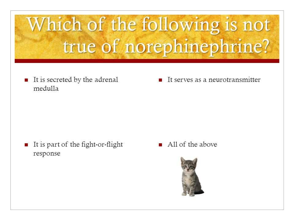 Which of the following is not true of norephinephrine.
