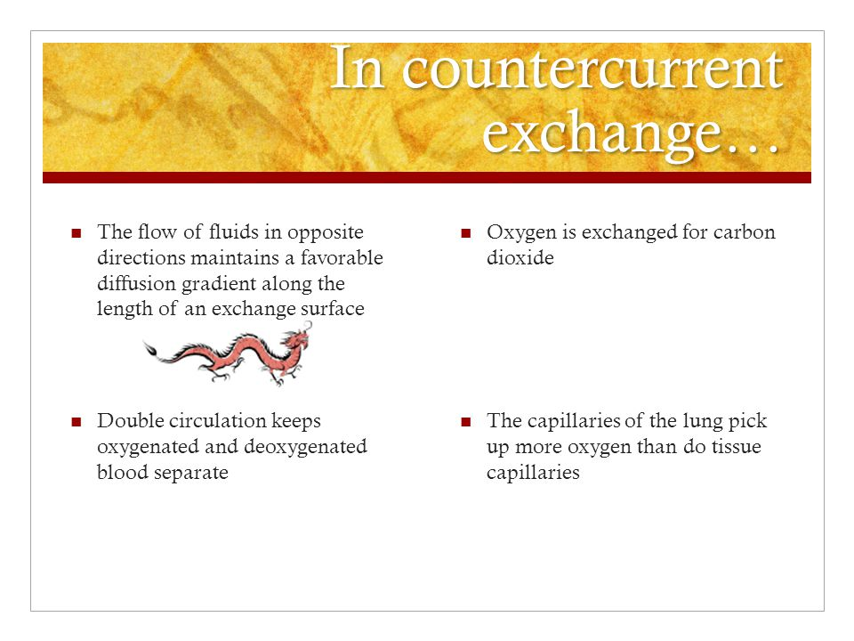 In countercurrent exchange… Oxygen is exchanged for carbon dioxide The capillaries of the lung pick up more oxygen than do tissue capillaries The flow of fluids in opposite directions maintains a favorable diffusion gradient along the length of an exchange surface Double circulation keeps oxygenated and deoxygenated blood separate